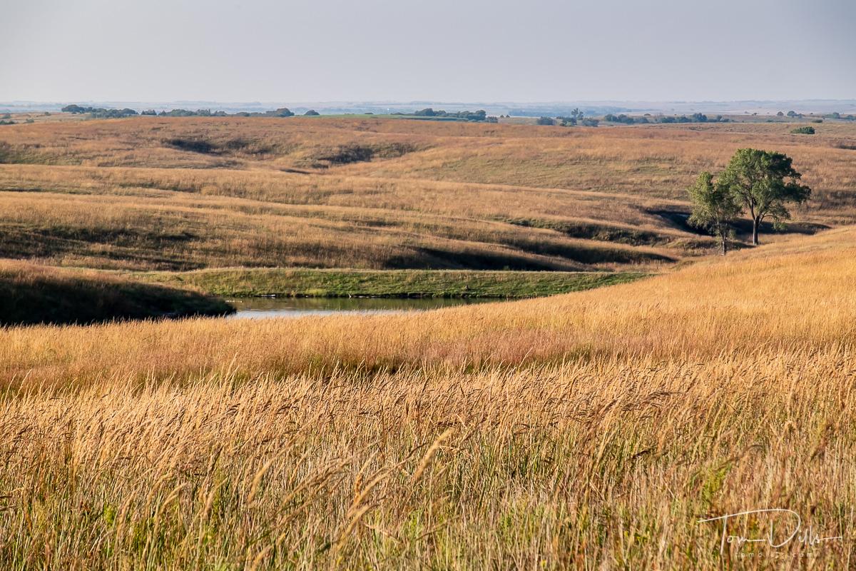 Willa Cather Memorial Prairie Historical MarkerOverlook on US-281 near Red Cloud, Nebraska