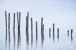 Remnants of stakes and fencing used to restore marsh areas at Blackwater National Wildlife Refuge, Maryland