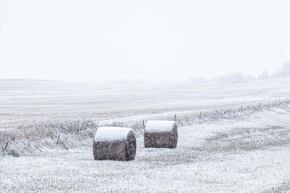 Snowy roadside scene along SR 79 near Reeder, South Dakota