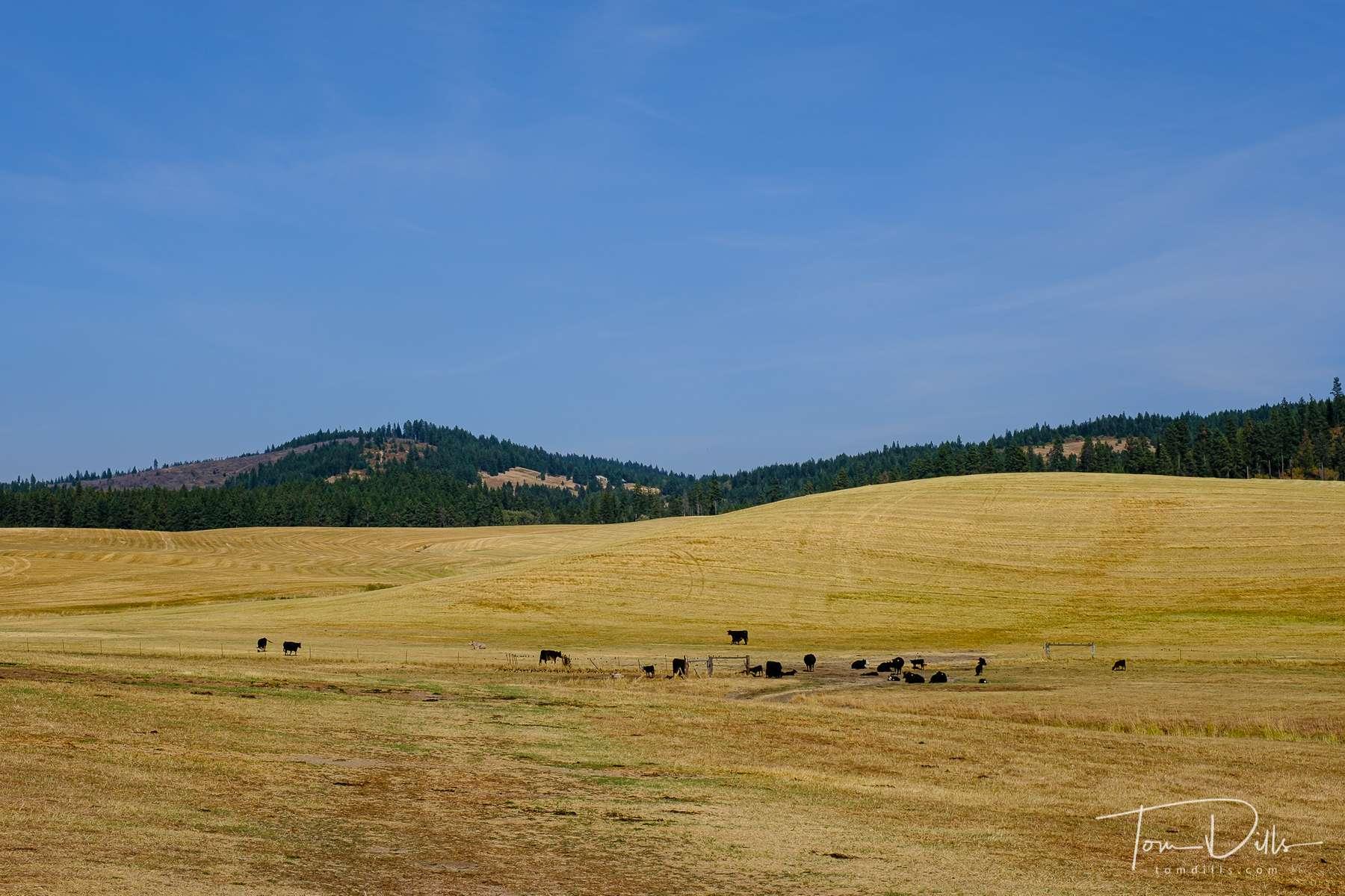 Rural countryside along US 95 in western Idaho