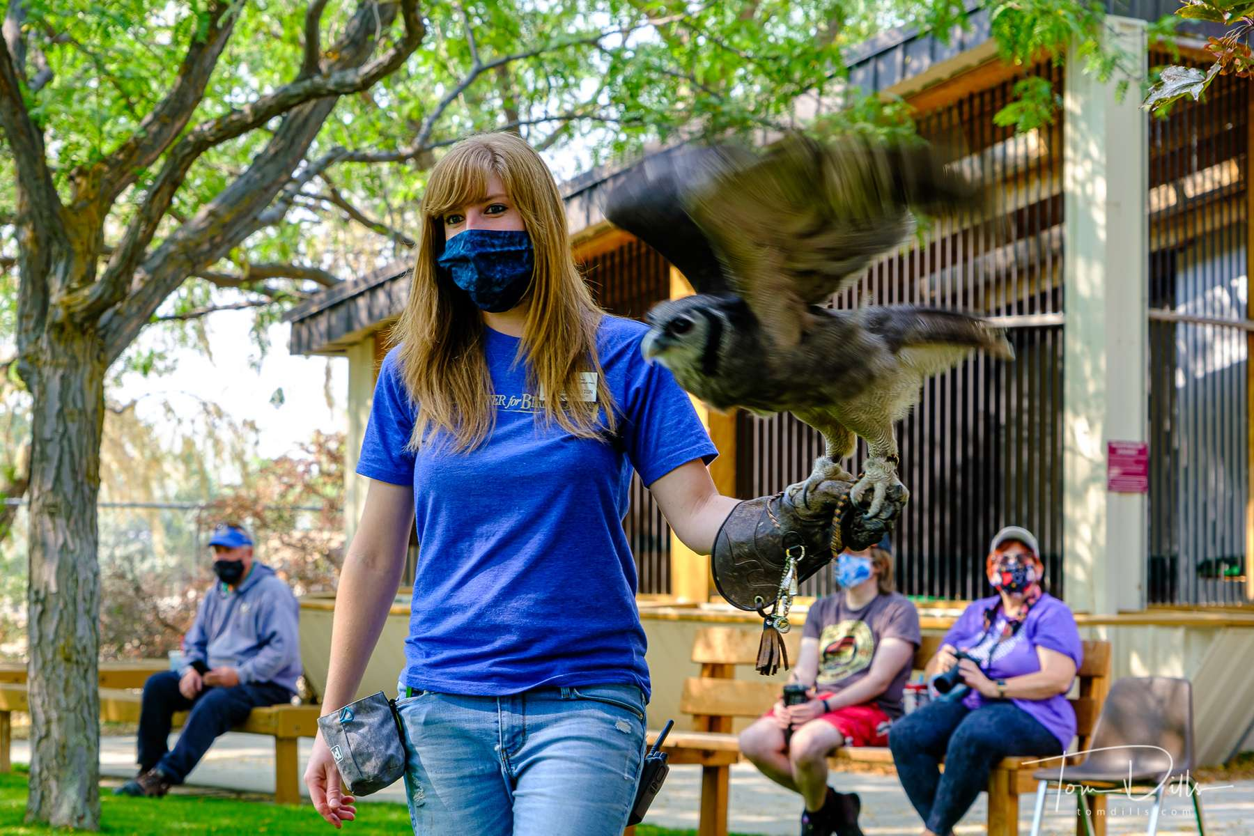 Flight demonstration with Oliver the Verreaux's Eagle-owl at the World Center for Birds of Prey in Boise, Idaho