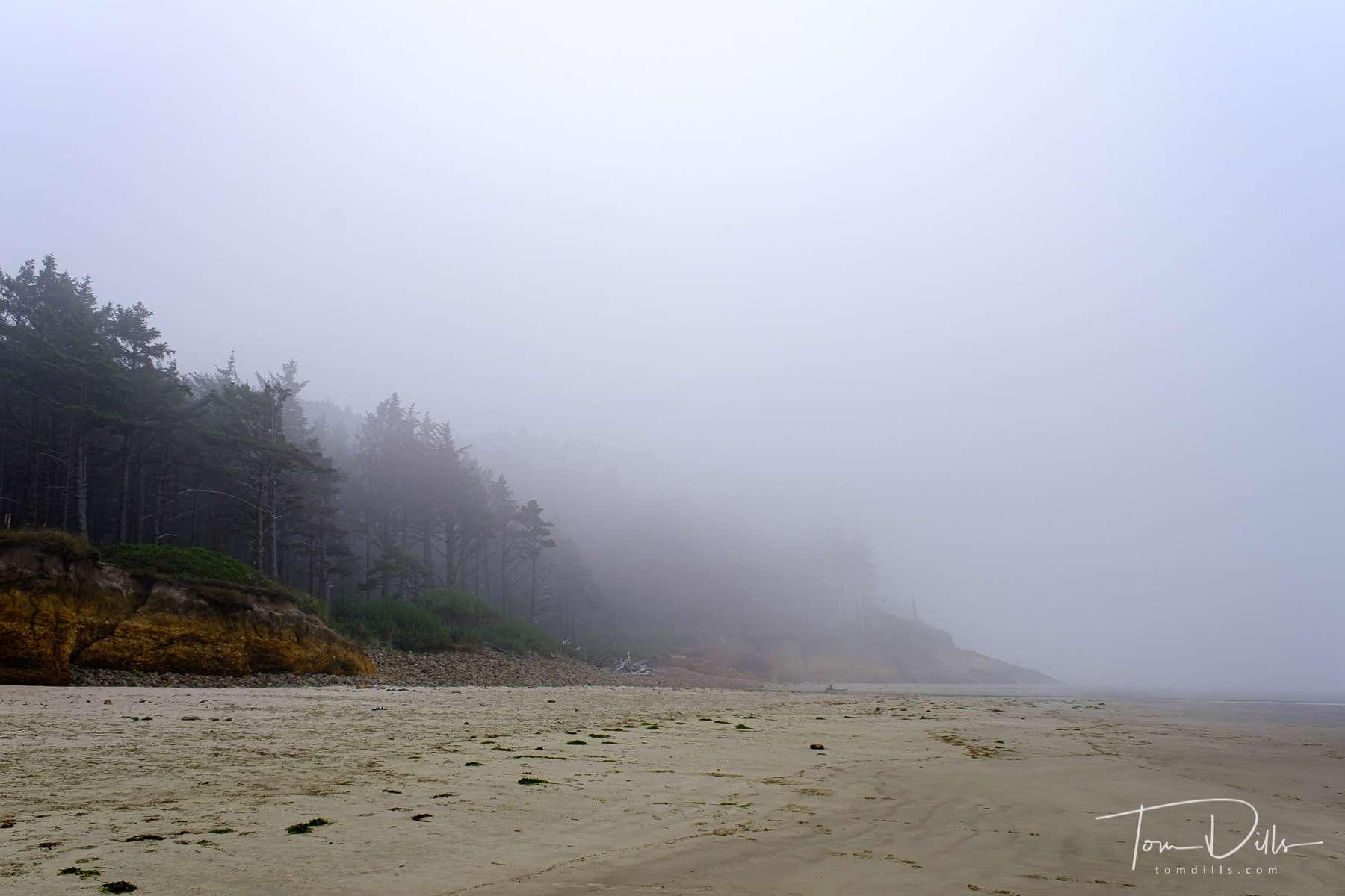 Cape Lookout State Park near Tillamook, Oregon