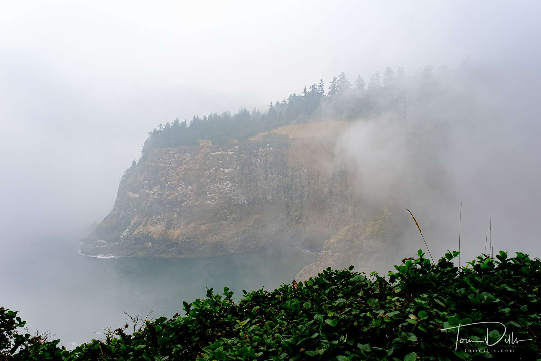 Foggy views from Cape Mears, Oregon