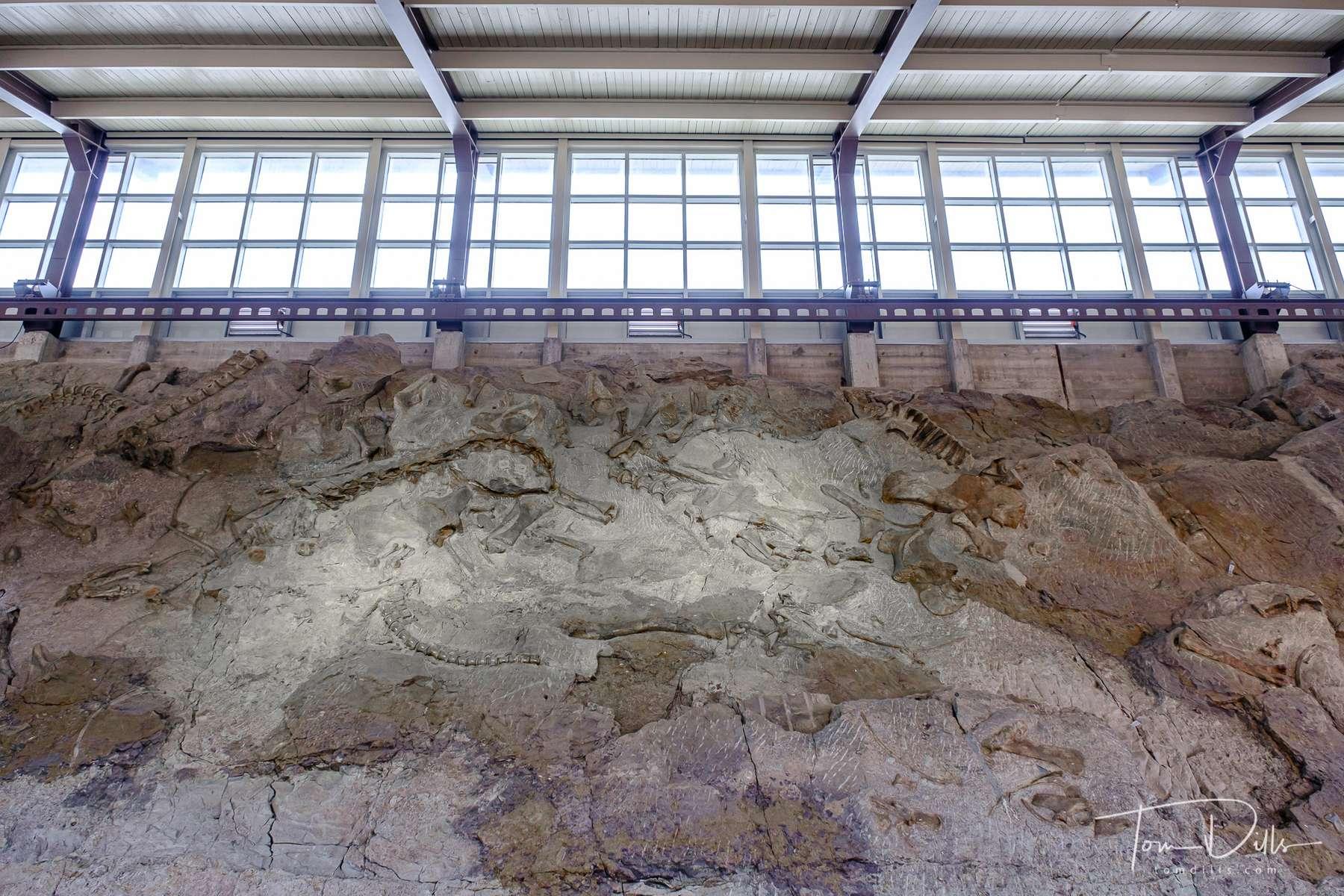 Quarry Exhibit Hall and the wall of dinosaur bones at Dinosaur National Monument near Jensen, Utah
