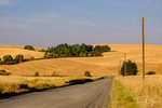 Rural scenery in The Palouse area of eastern Washington north of Pullman, Washington