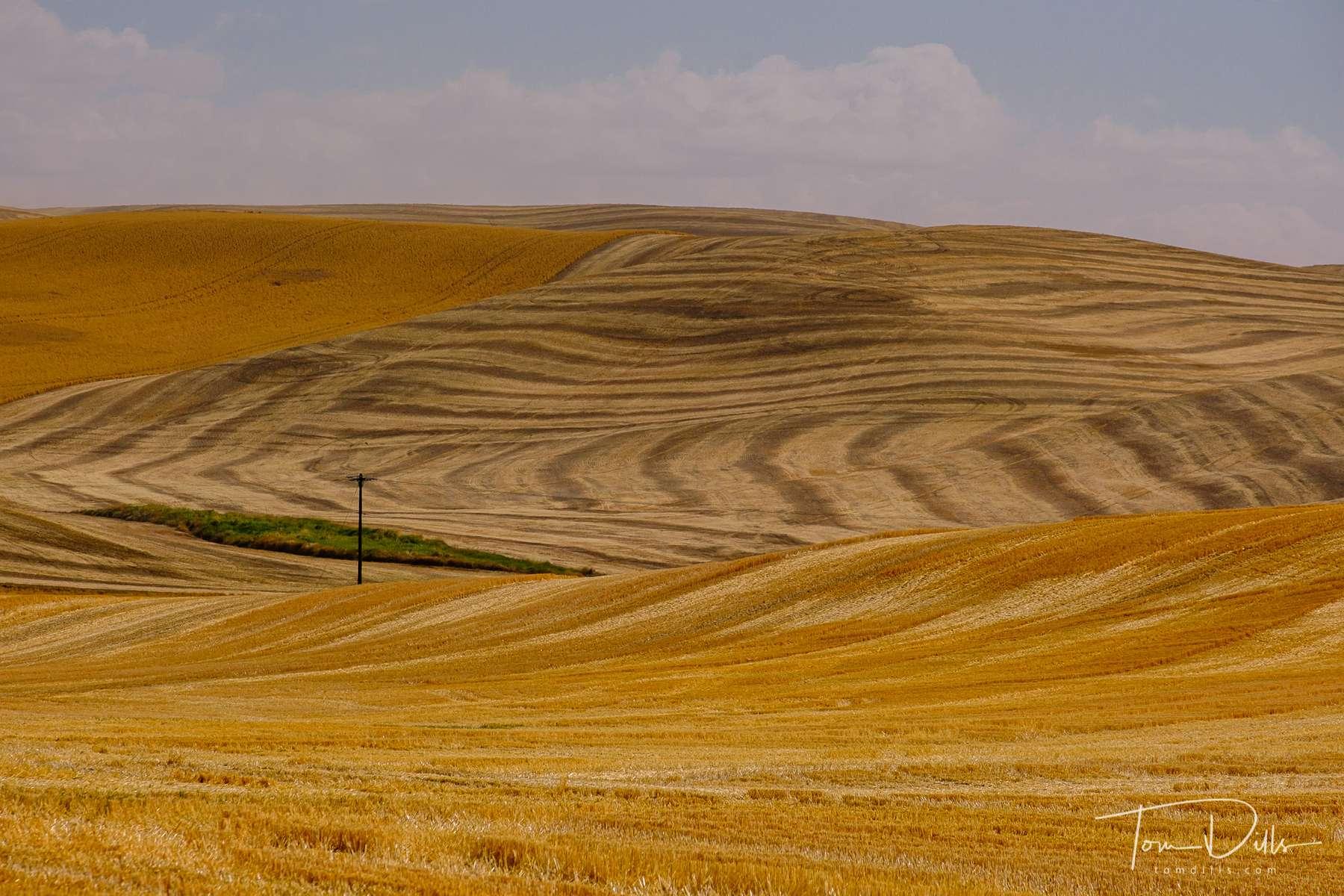 Rural countryside along SR 26 in southeastern Washington