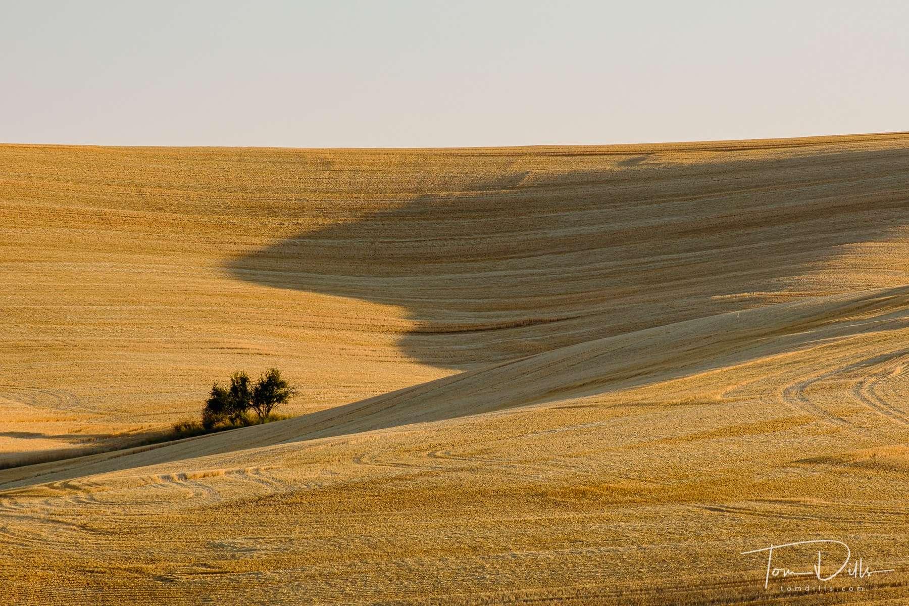 Rural scenery in The Palouse area of eastern Washington north of Pullman, Washington