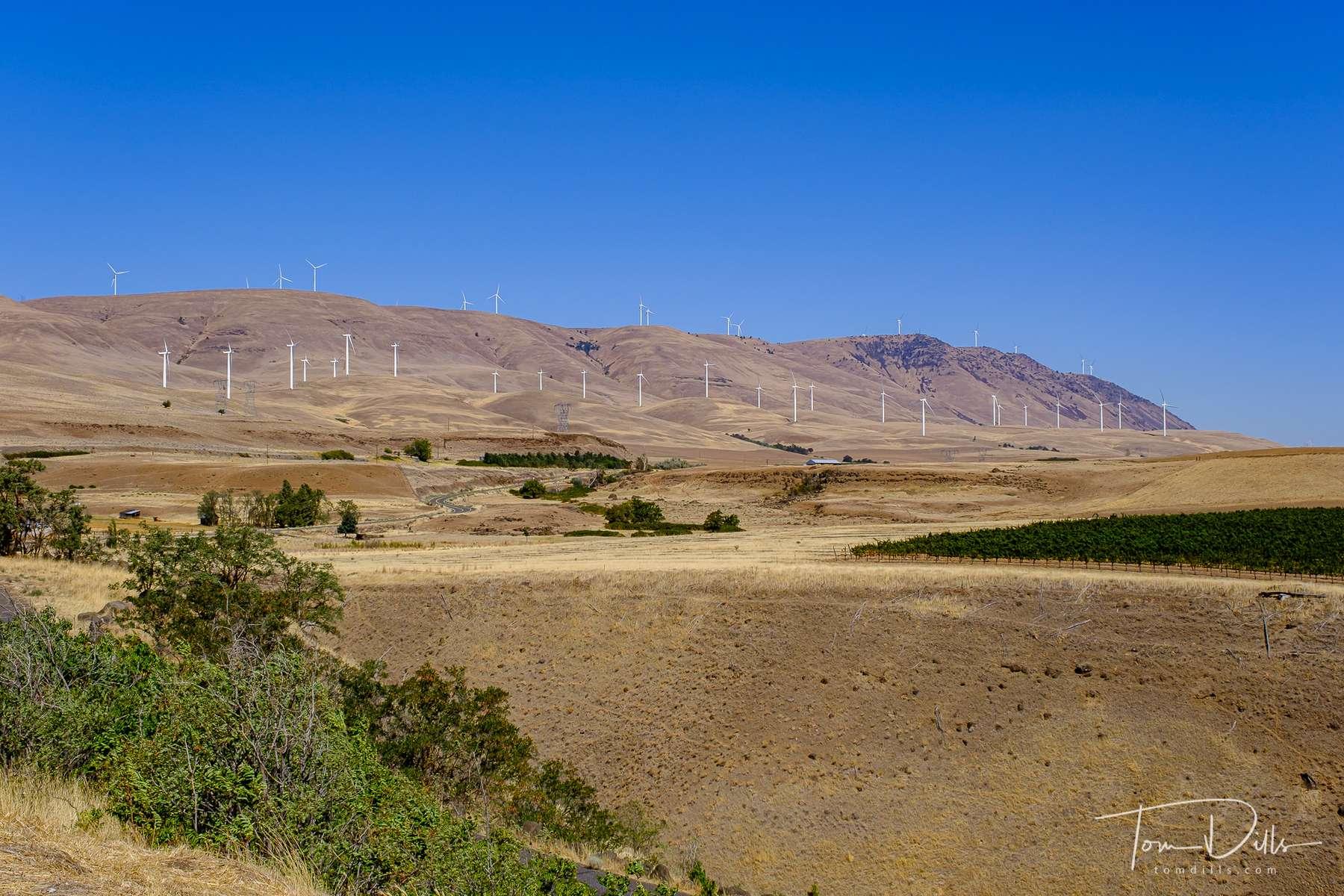 Wind turbines in the Columbia River Valley from Stonehenge along SR-14 near Maryhill, Washington