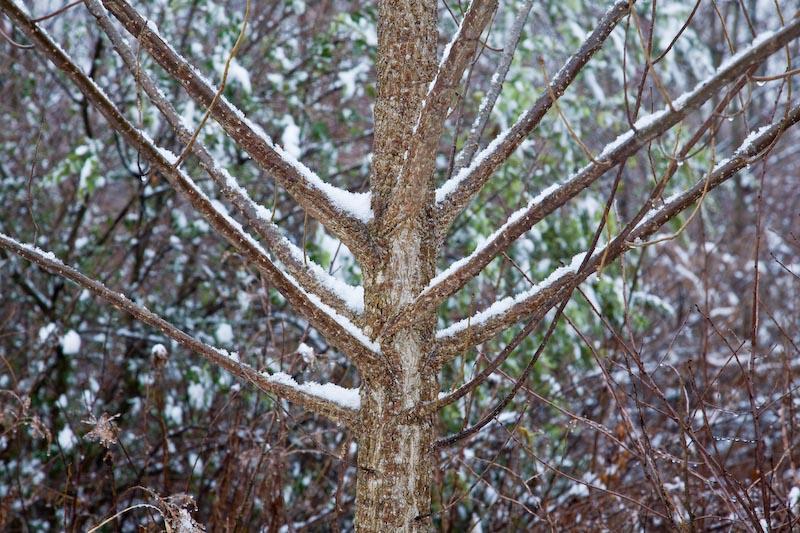 First snow, Torrence Creek Greenway, Huntersville, North Carolina