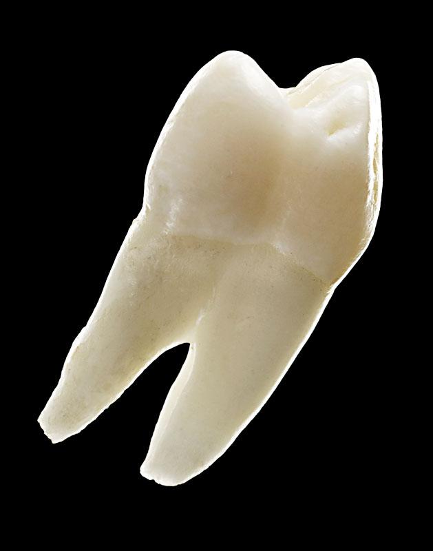 _Teeth01_042
