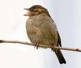 BirdWalk_DSF0304_crp