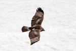 BirdWalk__DSF0326_crp