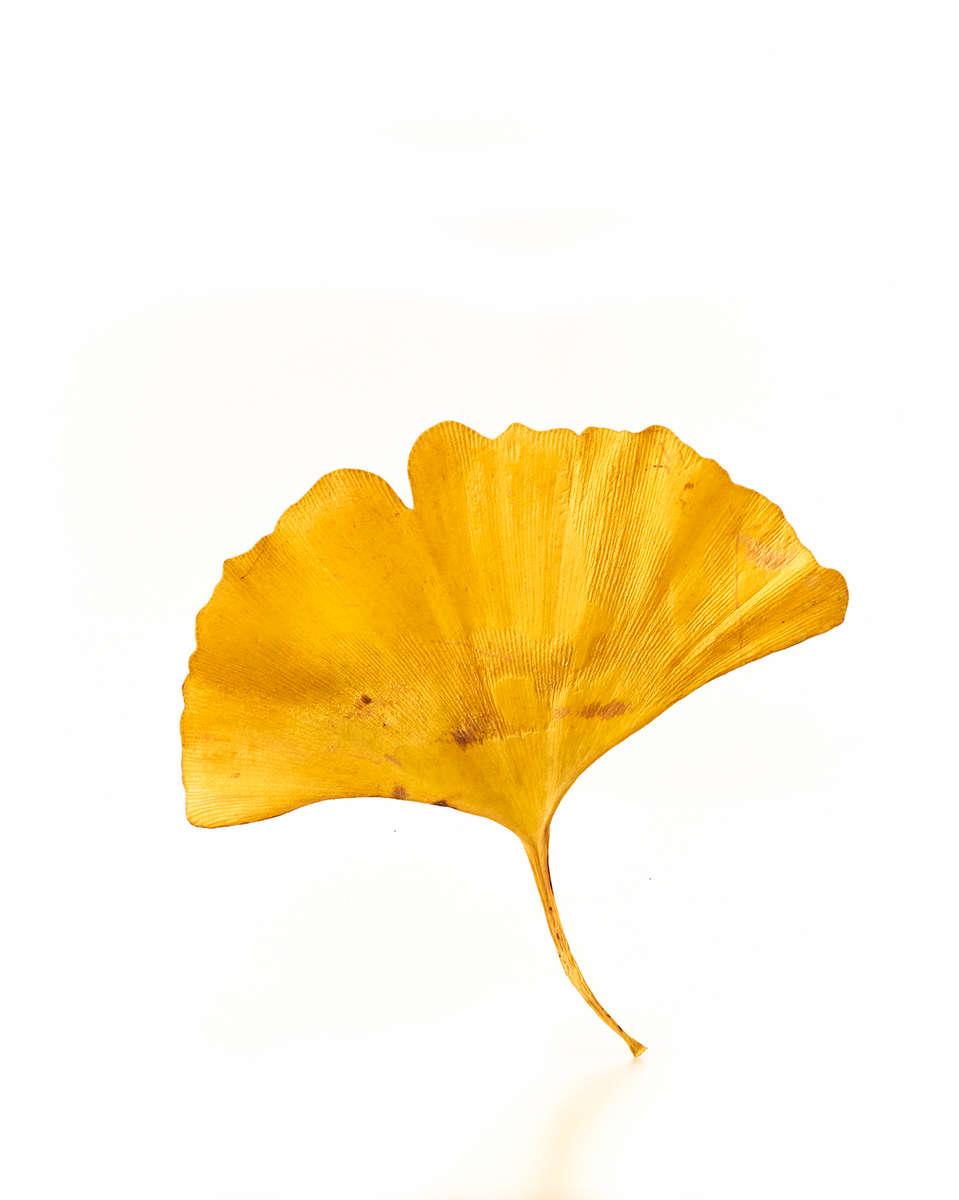 Leaf_0734_