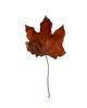 Leaf_0741