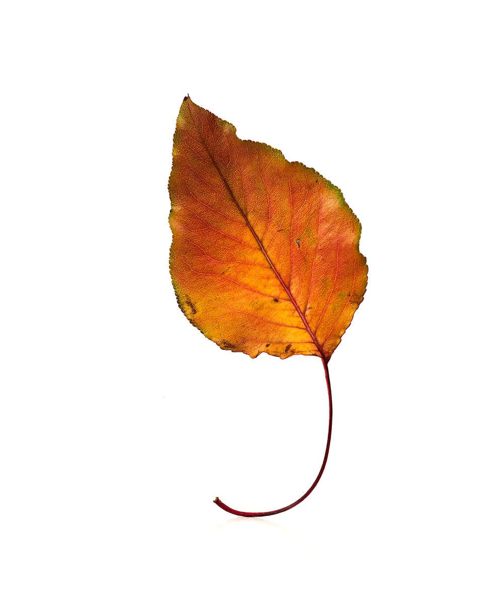 Leaf_0751