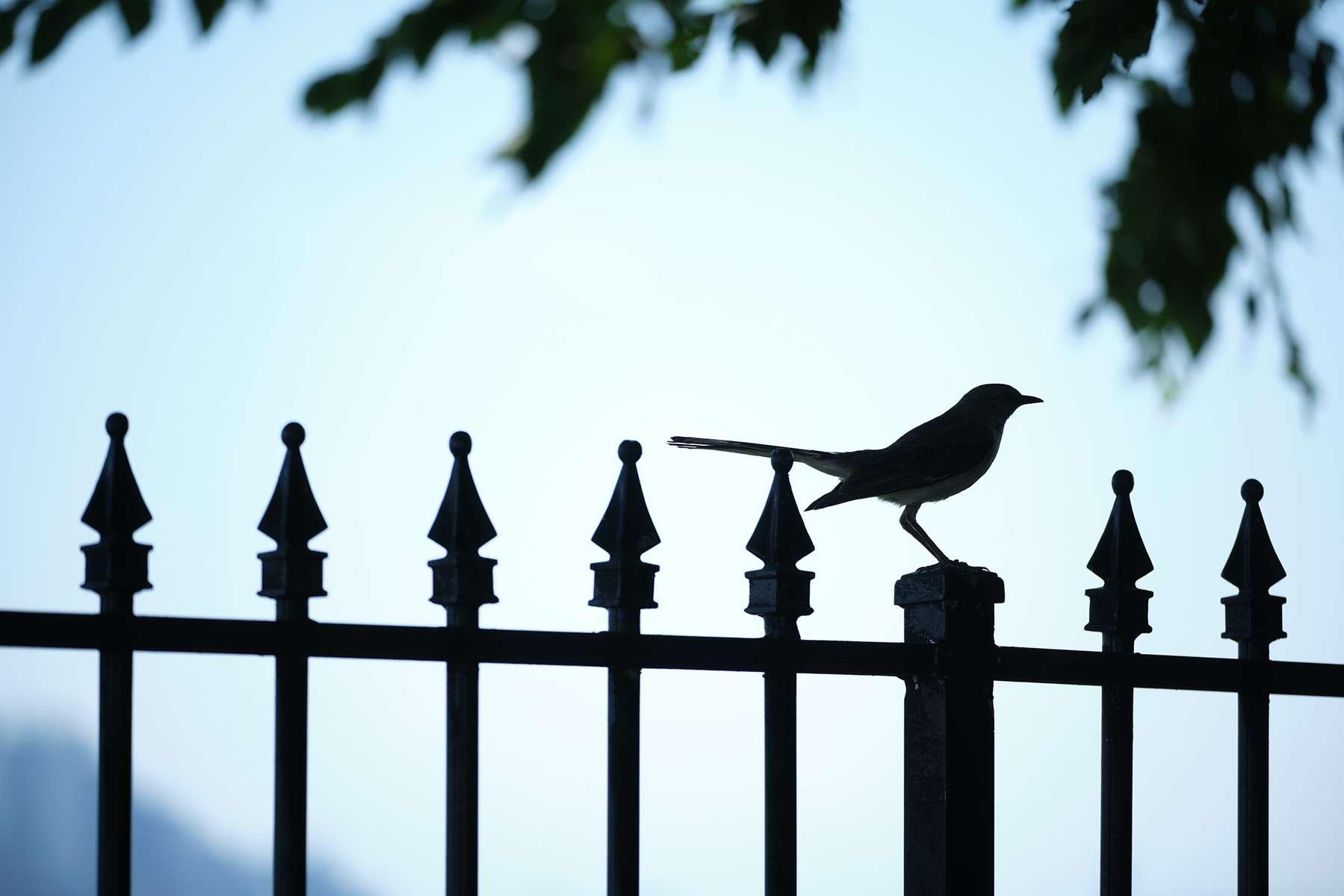 bird_480