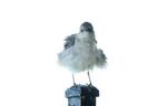bird_860_adj