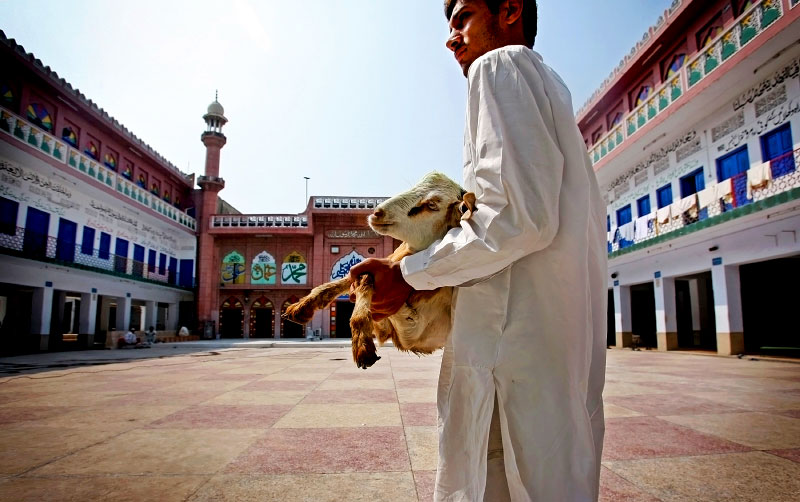 A student carries a goat recently donated to the Jamia Naeemia madrassa through the school to be sacrificed for a meal during the holy month of Ramadan. Many madrassas run solely on donations from the local community.