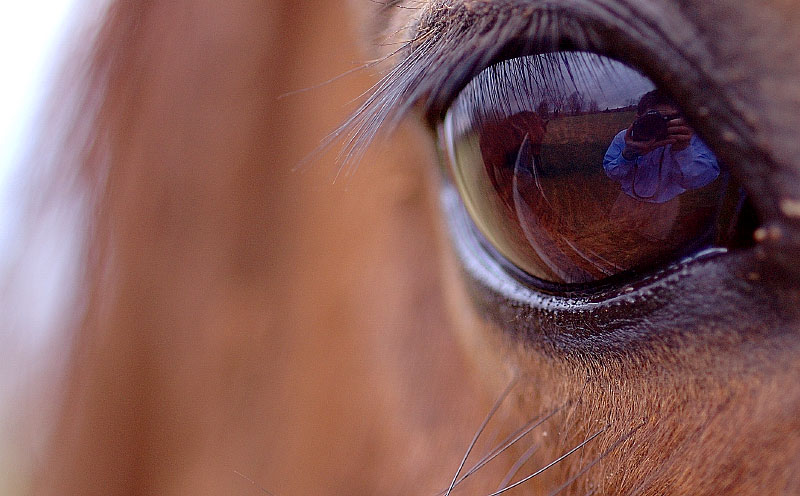12jan05-horses094