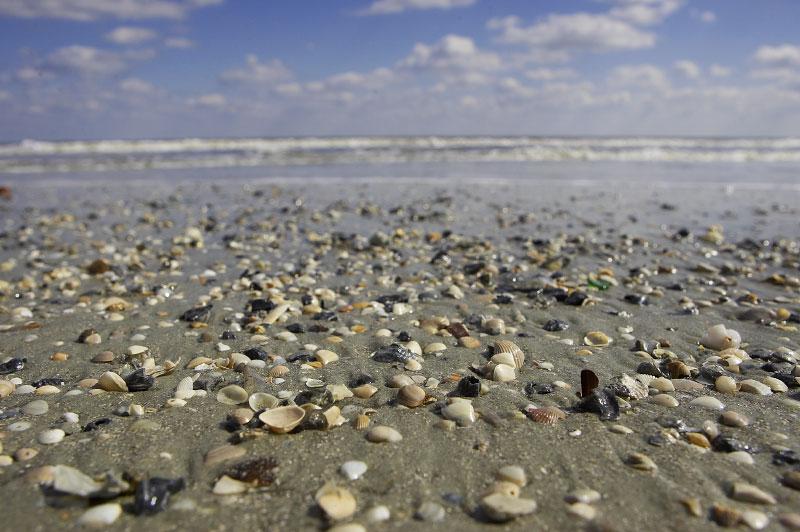 Savannah-Oct2005-0087