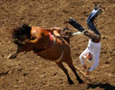 Cody Martin of Eagle, Colorado, flips off his horse in the saddle bronc riding competition at Sunday's California Rodeo Salinas.