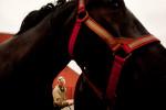 20110525__AARP_Kansas__0473