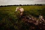 20110525__AARP_Kansas__6388