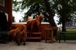 20110528__AARP_Kansas__1110