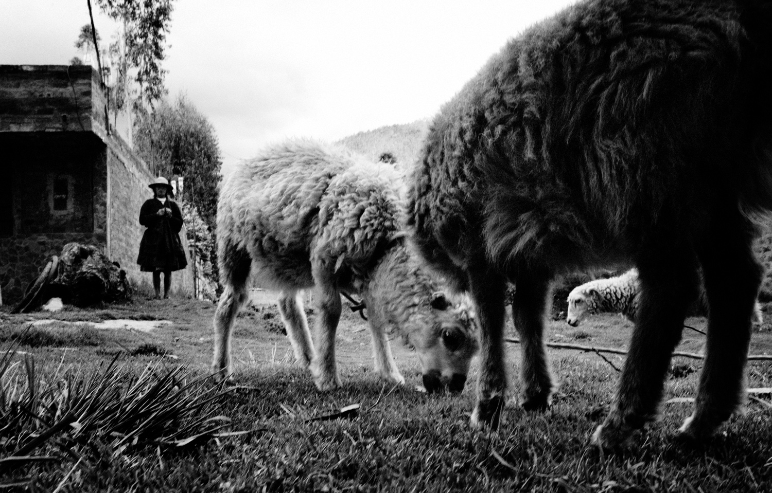 Labariana Mendoza, stands watch over her and her sister's sheep while also knitting a scarf, in a pasture near her house. Hualhaus is a small town northwest of Huancayo in the Central Highlands that is known for its fine weavings. Life here exists has it has for centuries. The people raise their own sheep and alpaca, hand-spin their own threads, and make their own natural dyes from grinding roots leaves flowers, fruits and minerals, much as it was done by the pre-Incan cultures of the Nasca and Paracas. Many of the towns in the Mantaro Valley are known for specific crafts. They have begun to market themselves to raise tourism and bring money directly to the towns, rather than having to send their wares of to markets and pay much of their profits to middlemen.