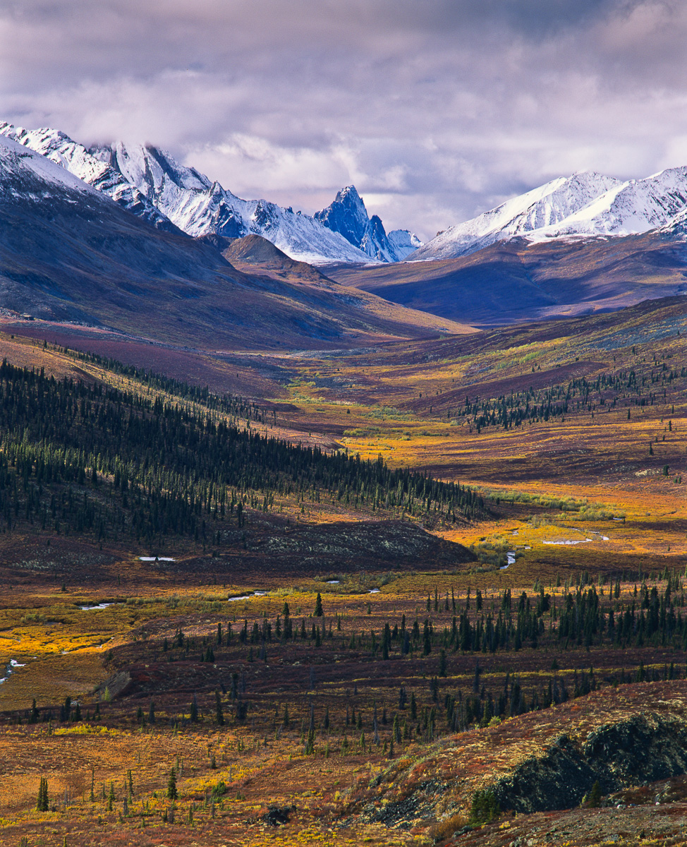The Tombstone Valley in the Northern Yukon. This is a portion of the winter range of the Porcupine Caribou herd. Although not nearly as well know as the breeding grounds in ANWR this area to is also threatened ny the possibility of mining and pipeline development.