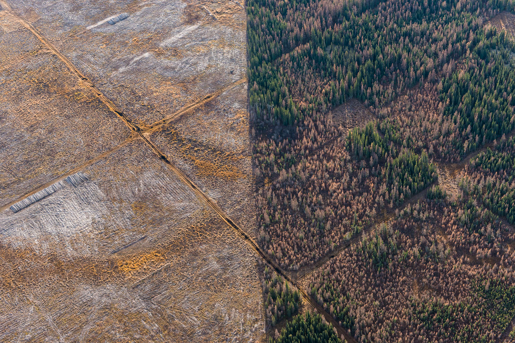 Clearing of boreal forest/{quote}over burden.{quote} Alberta Tar/Oil Sands Northern Alberta, Canada.