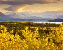 "This area, located in the extreme northwest of British Columbia, marks the western boundary of the boreal region. On the border of the Yukon and Southeast Alaska, the western flank of these mountains descends into Alaska's Tongass Rainforest and British Columbia's Great Bear Rainforest. Far from the Tar Sands, the greatest remaining coastal temperate and marine ecosystem is threatened by the proposal to build a 750 mile pipeline to pump 550,000 barrels a day of tar sands crude to the coast. Once there, it would be shipped to Asia through difficult to navigate waters where a relatively small B.C. Ferry ran aground and sunk in 2006.24""x30""          Edition of 10          $150035""x45""          Edition of 10          $3200*40""x50""          Edition of 5           $6000*Exhibition print:40""x50"" archival pigment print on Hahnemuhle bamboo, bonded to aluminum."