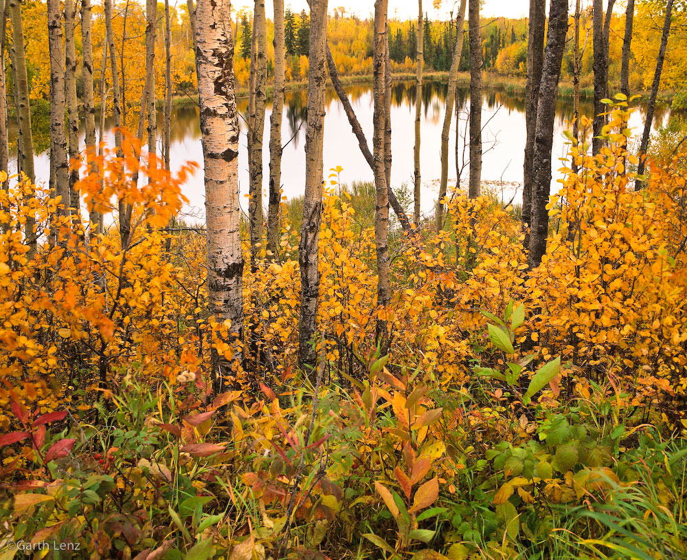 Northern Alberta.Copyright Garth Lenz. Contact: lenz@islandnet.com www.garthlenz.com