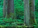Callicum watershed. Nootka Island, B.C.,              Copyright Garth Lenz. Contact: lenz@islandnet.com www.garthlenz.com