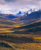 At the border where the Boreal, or Taiga, meets the treeless Tundra, this valley is the wintering ground for the Porcupine Caribou Herd whose breeding and calving ground is the Arctic Nation Wildlife Refuge.Exhibition print:  35{quote}x45{quote} archival pigment print on Hahnemuhle bamboo, bonded to aluminum.
