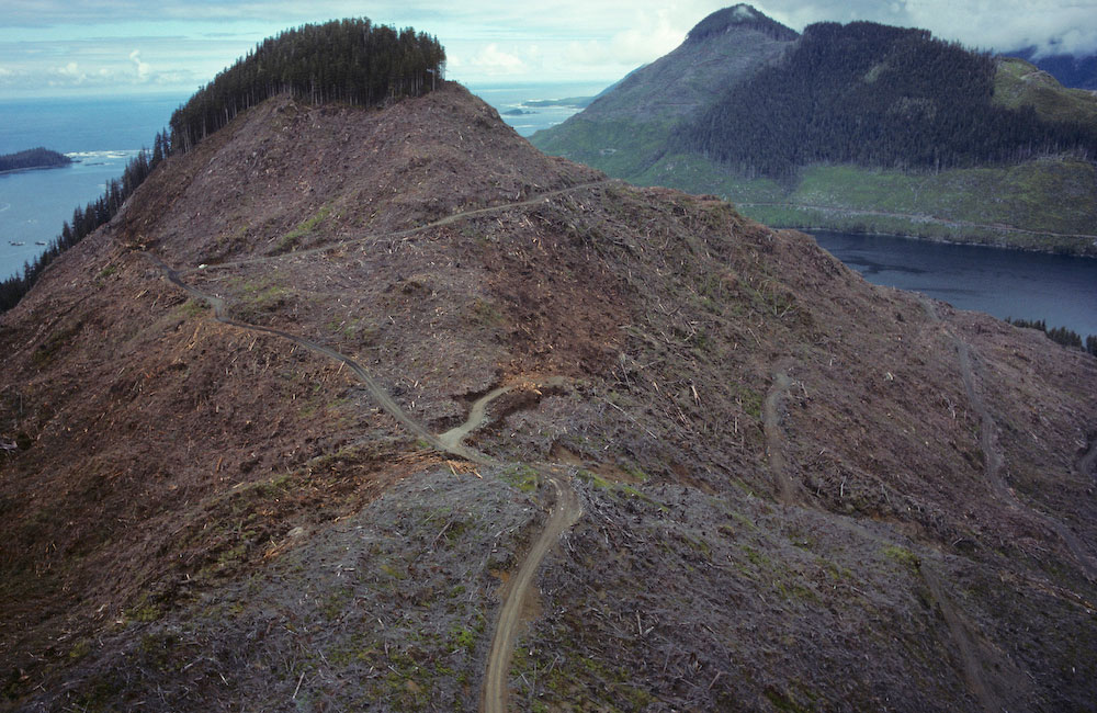 Another early aerial image while flying with Vicky Husband of the Sierra Club back in 1990. Yaky Kop Cone, Quatsino Inlet, Vancouver Island. B.C. Nicknamed {quote}Mr T{quote} by Doug Tompkins when edited for the book {quote}CLEARCUT.{quote}
