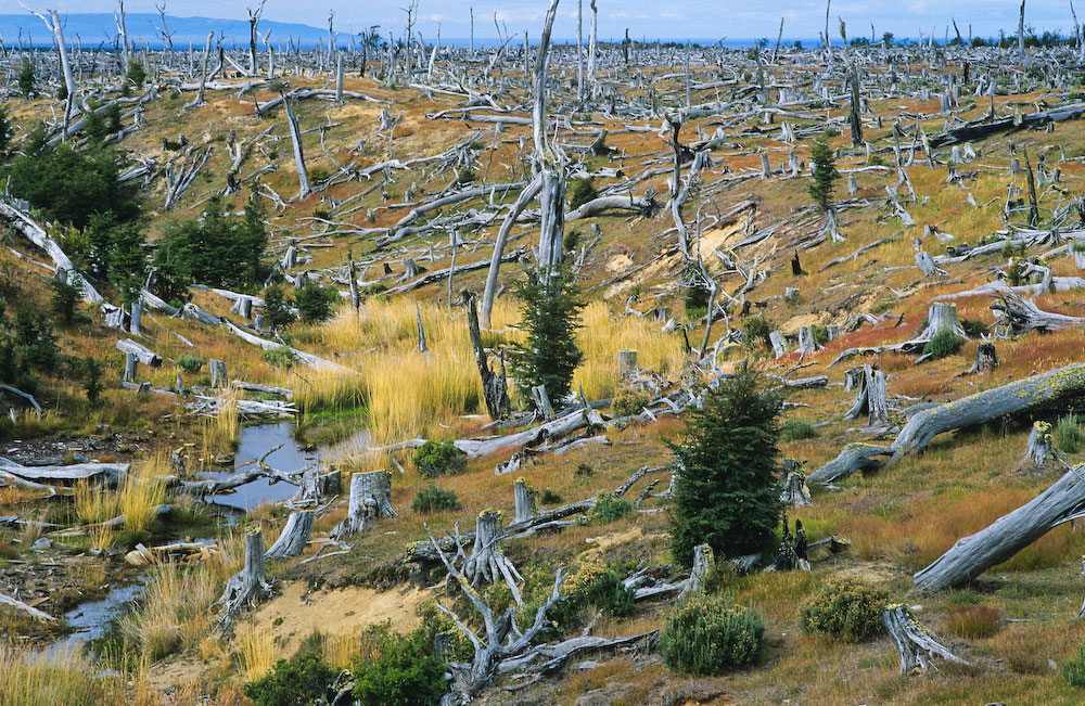 This may be the World's most southerly clearcut. Originally deforested for cattle grazing, it is at the tip of Mainland Chile with the Straits of Megellan visible in the background. As clearcut logging pushes further north into areas that were previously intact, so to does industrial logging now threaten southern areas like Tierra del Fuego, which until recent times was free of industrial logging.