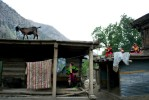 A goat roams the roof of a Kalash home in the Bumburet Valley. Most Kalash survive by subsistence farming and raising livestock, building their homes, one on top of another, into the sides of the mountains in the remote Kalash Valleys of Pakistan's Hindu Kush.