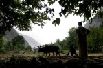 A Kalash farmer plows his fields following the grain harvest in Bumburet Valley. The Kalash, believed to be descendants of the first Aryans, survive in three high altitude valleys in the remote Pakistani Hindu Kush Mountains.