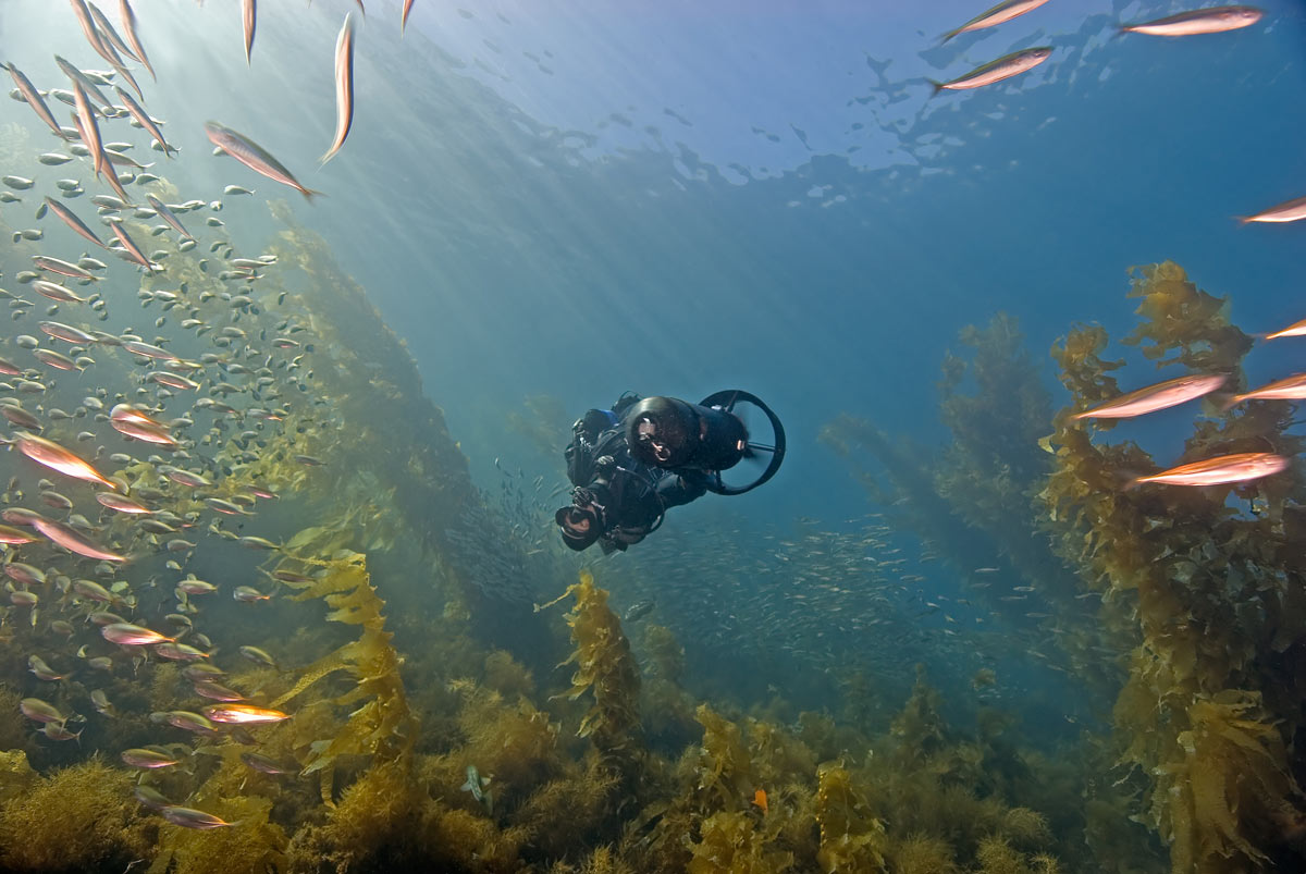 Scootering among the late season schools of Jack Mackerel in the clear waters of Catalina Island.