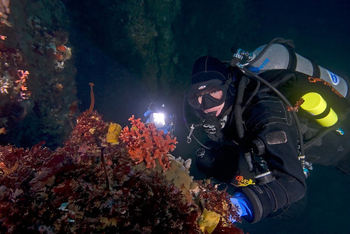 On a knife edge rock running between two large underwater pinnacles at about 112 feet deep, the diver views two iconic Monterey sea creatures.