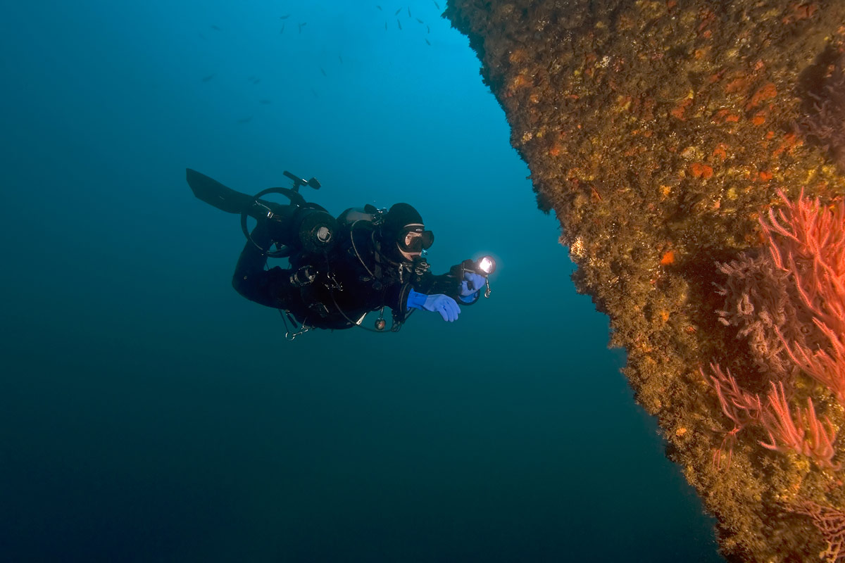 This wreck, sunk nearly 80 years ago, has become a reef - covered with life.  Claudette is desending and looking closely at the bow.