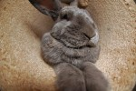One of my rabbits in the cat furniture.