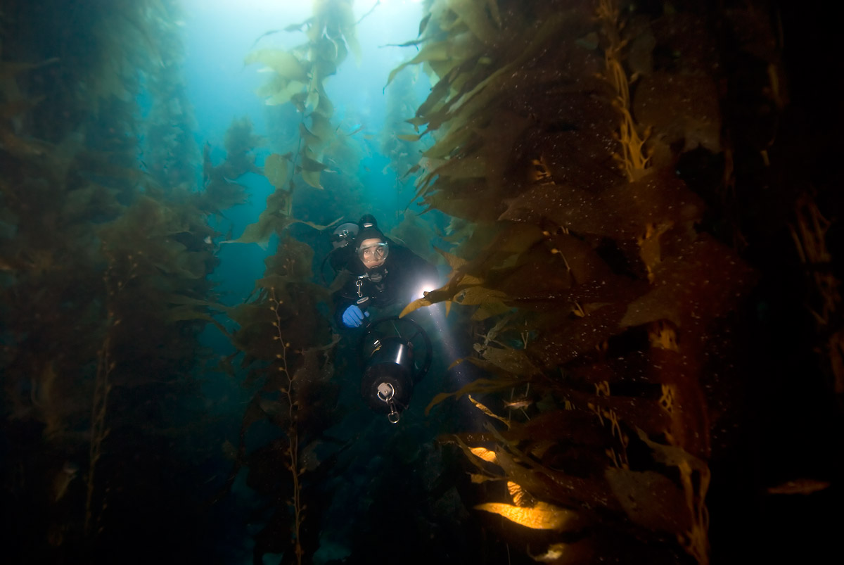 Scootering in the dense SoCal kelp.