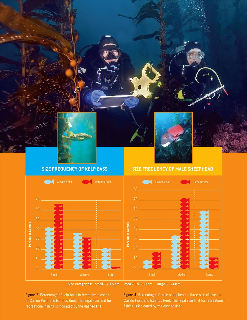 Two California Reef Check volunteer divers featured on the Executive Summary.