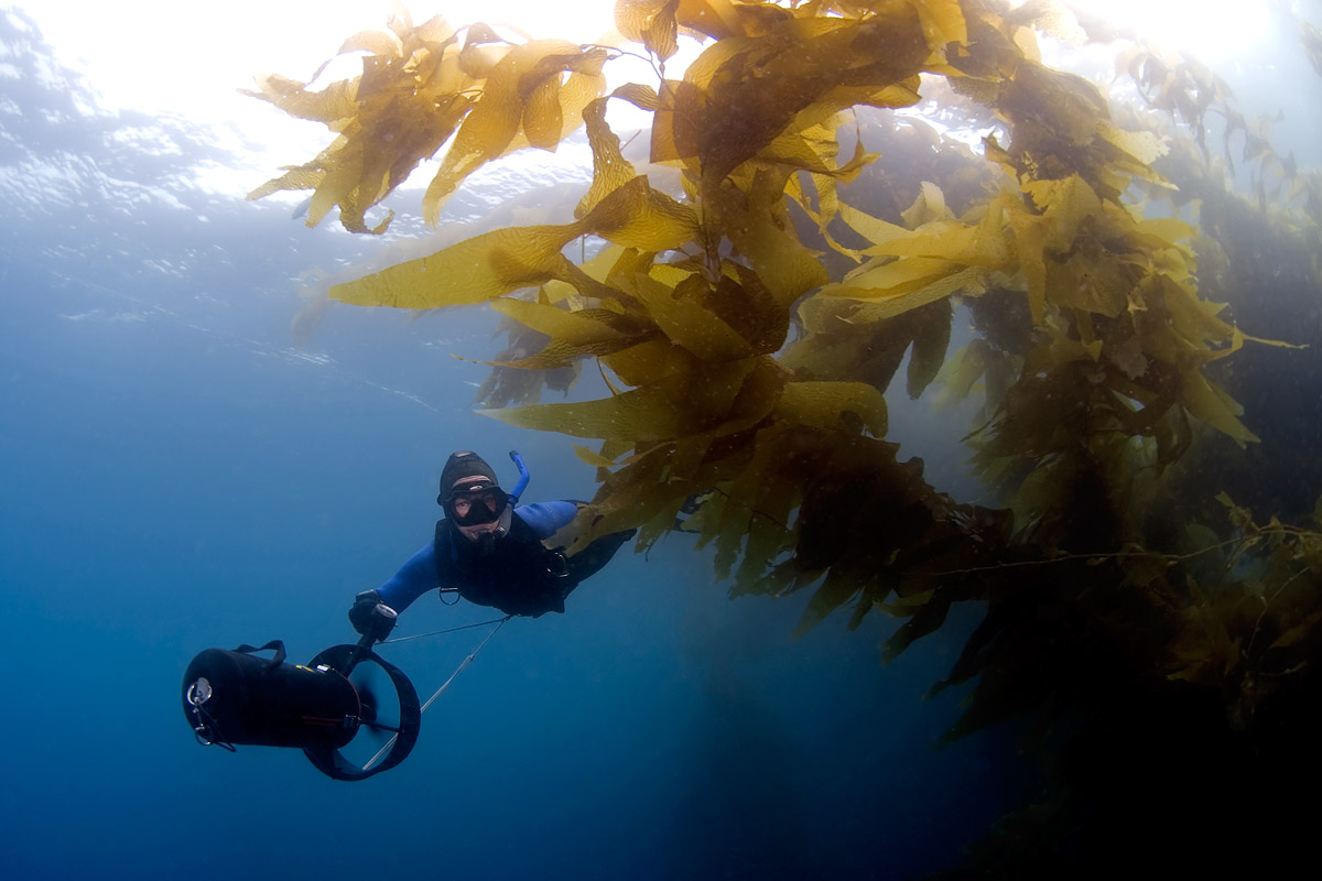 The kelp on this part of Catalina is thick and lush.  Full of life as we silently glide by.