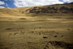 oxfam_cuzco_03