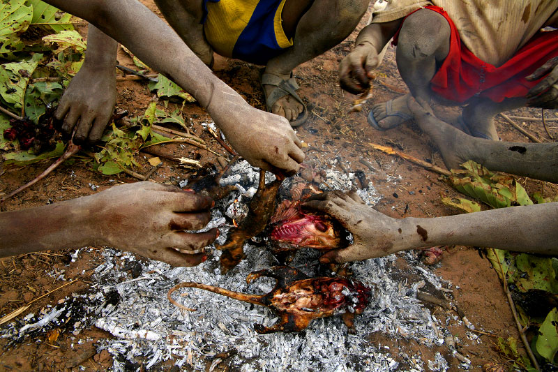 Young boys cook bush-rats over a fire outside of Wantugu. Food becomes scarce during northern Ghana's dry season, so people burn brush outside of the town and kill the animals that run out for their meat.