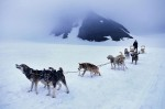 Dogsledding on Godwin Glacier