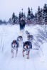 Dogsledding the Arctic Circle
